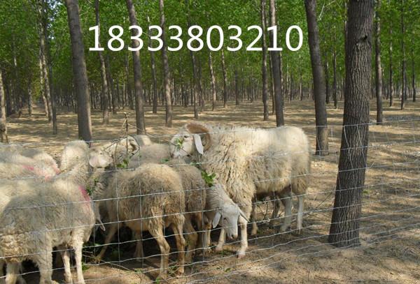 草原隔离网